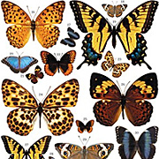 Butterfly Color Rub-Ons