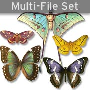 Butterflies & Moths Set Download