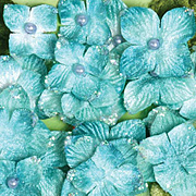 Velvet Hydrangeas - Aqua Blue