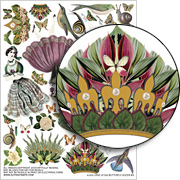 Land of the Butterfly Queen #1 Collage Sheet