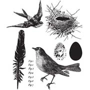 Birds of a Feather Cling Stamp Set