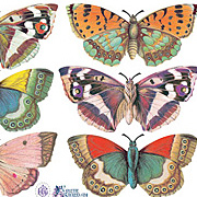 9 Classic Butterflies Stickers