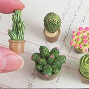 Miniature Cactus Set