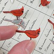Cardinal Brads
