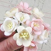 Cherry Blossom Cream to Pink Mix