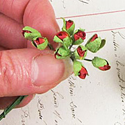 Closed Red Tiny Rose Buds