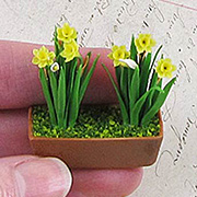 Miniature Daffodils in Window Box