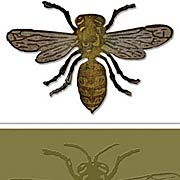 Layered Bee Die & Embossing Folder Set