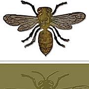 Layered Bee Die & Embossing Folder Set
