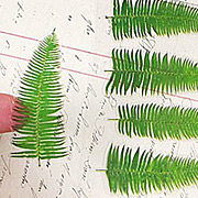 Fern Leaves Stickers