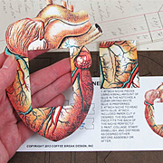 Anatomy Shrine Kit - Anatomical Heart