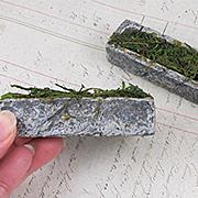 Miniature Garden Hedge