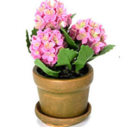 Miniature Pink Hydrangeas in Flower Pot