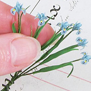 Miniature Iris Stems