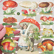 Mushrooms Dresden Scraps