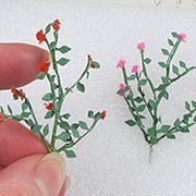 Miniature Rose Vines