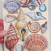 Travel Seashells Grand Adhesions