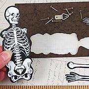 Vintage Articulated Skeleton