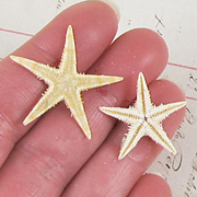 Small Tan Starfish